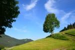 observer la nature paisible pour gérer le stress